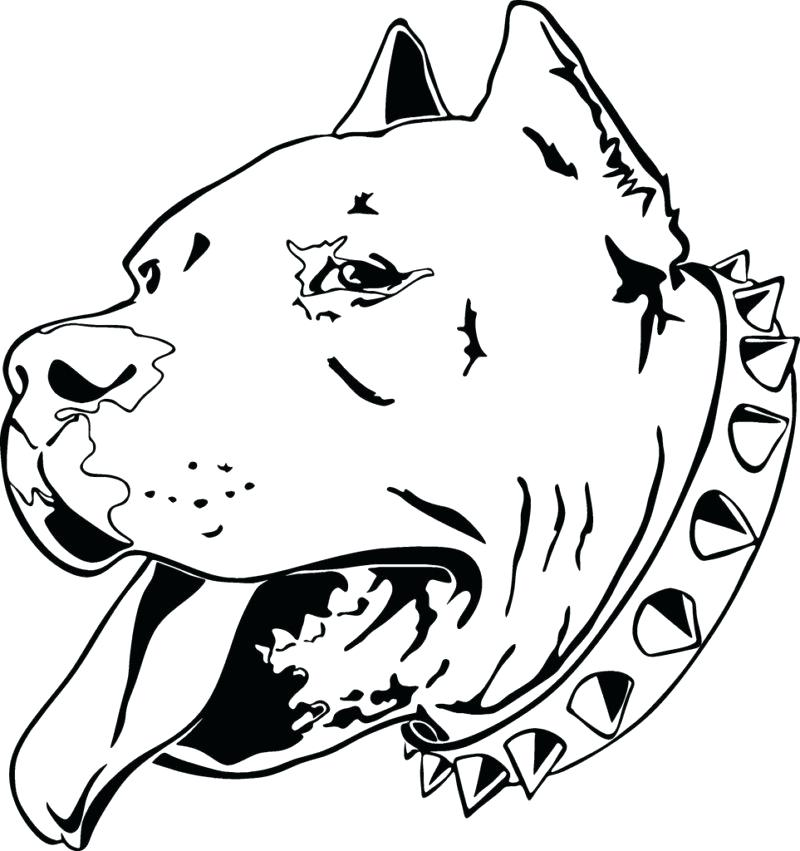 800x851 Pitbull Coloring Pages