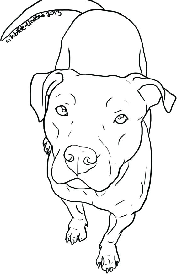564x872 Pitbull Coloring Pages Coloring Page Free Pit Bull Line Art