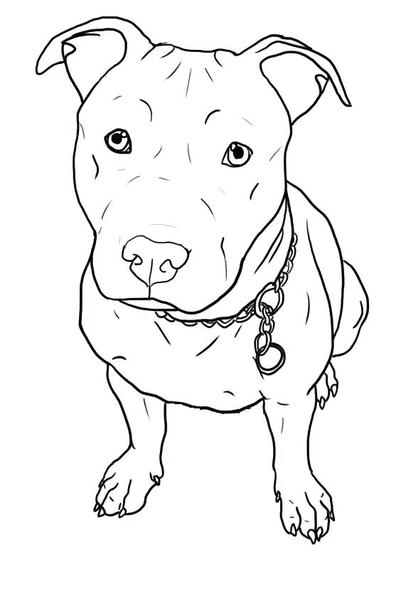 564x846 Pitbull Coloring Pages Glamorous Pitbull Coloring Pages Little