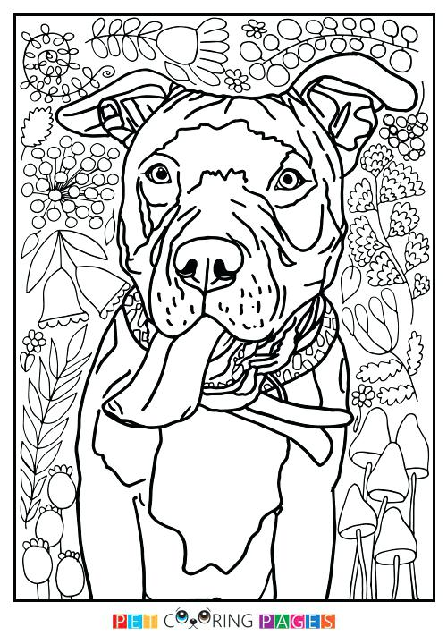 500x711 Pitbull Coloring Pages Pit Bull Terrier Coloring Page Cute Pitbull