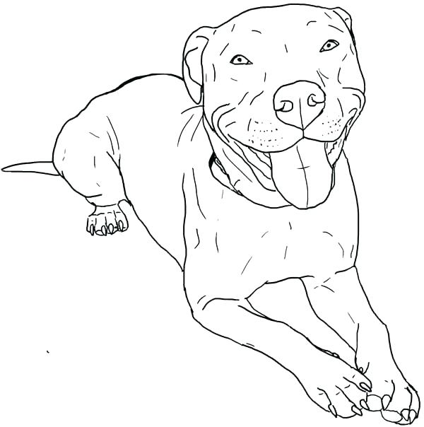 600x604 American Pitbull Coloring Pages Coloring Pages Coloring Pages