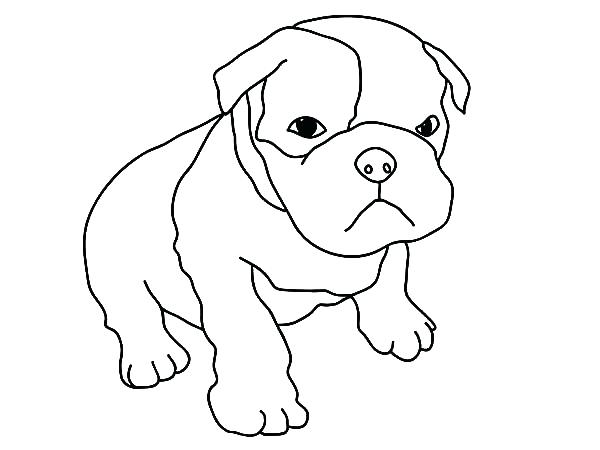 Pitbull Puppy Coloring Pages