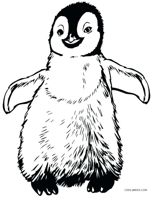 620x800 Penguins Coloring Pages Macaroni Penguin Coloring Page Penguins