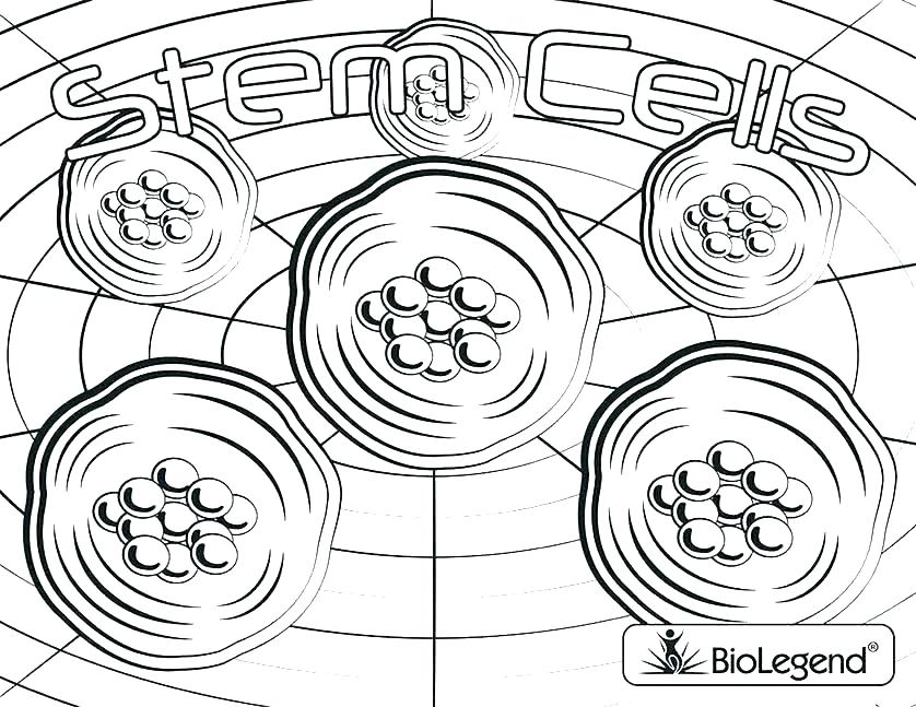 838x647 Cell Coloring Pages Cell Coloring Page Amazing Cell Coloring E