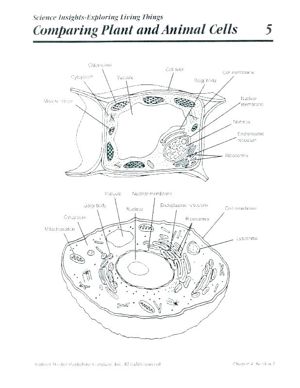 Plant Cell Coloring Page At Getdrawings Com