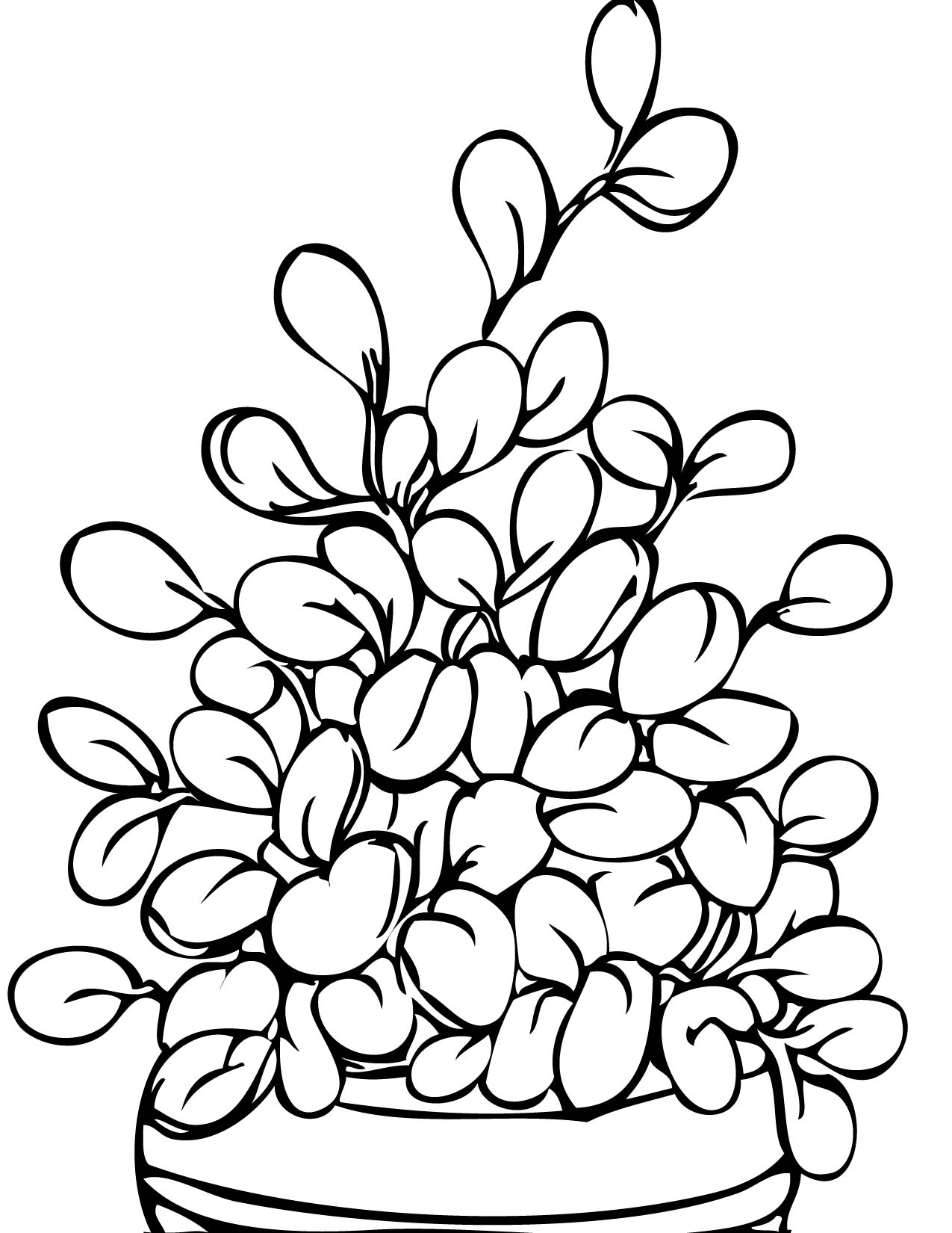 1275x1650 Jade Plant Coloring Page Handipoints Inside Pages