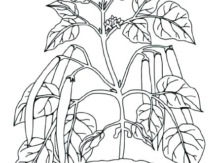 440x330 Plant Coloring Pages Drawn Jungle Plants Coloring Sheet Free
