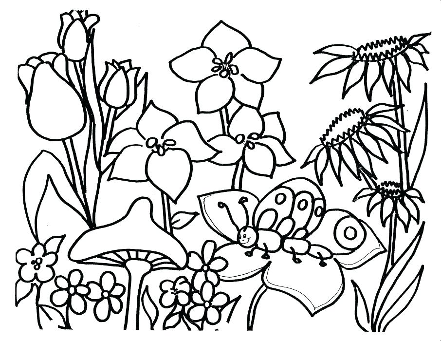 906x700 Plant Coloring Sheets Plants Coloring Page Download Flower