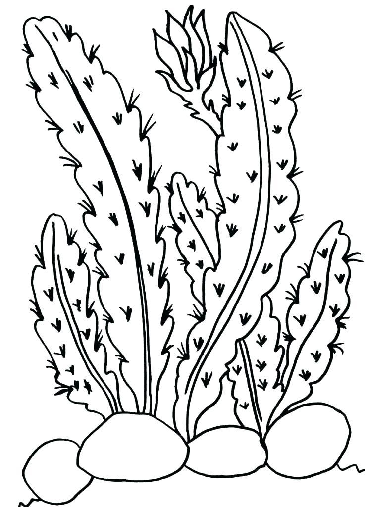 737x1024 Plants Coloring Pages Cactus Coloring Page Desert Plant Coloring