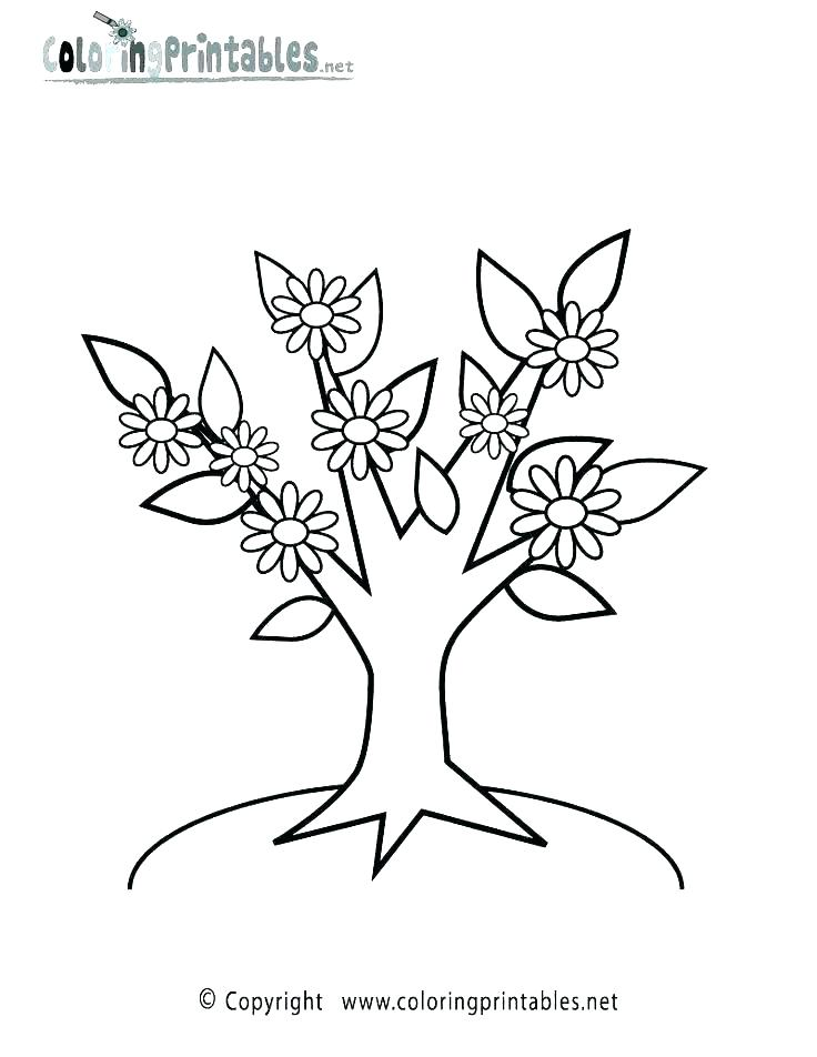 736x952 Plants Coloring Pages Printable Deepart