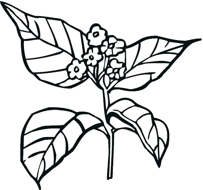 660x618 Coloring Pages Plants Coloring Pages Of Plants Plant Coloring