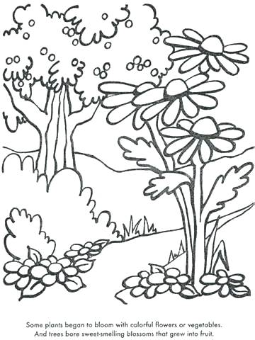 360x480 Coloring Pages Plants Coloring Pages Trees Plants Flowers