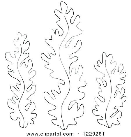 450x470 Seaweed Coloring Pages Seaweed Coloring Pages Ocean Plants