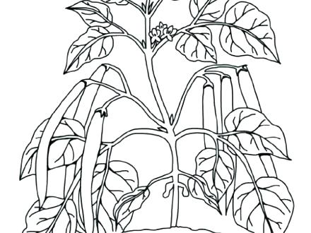 440x330 Plant Coloring Pages Top Rated Cell Coloring Page Pictures Plant