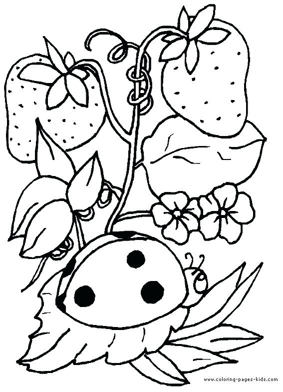567x784 Coloring Page Strawberry Ladybug With Strawberries Animal Coloring