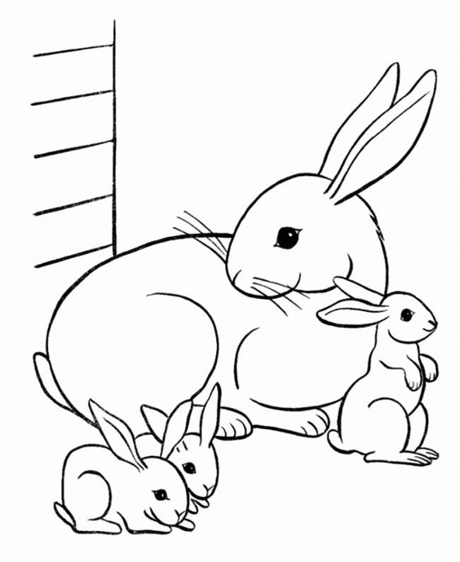 650x795 Exelent Rabbit Template Inspiration