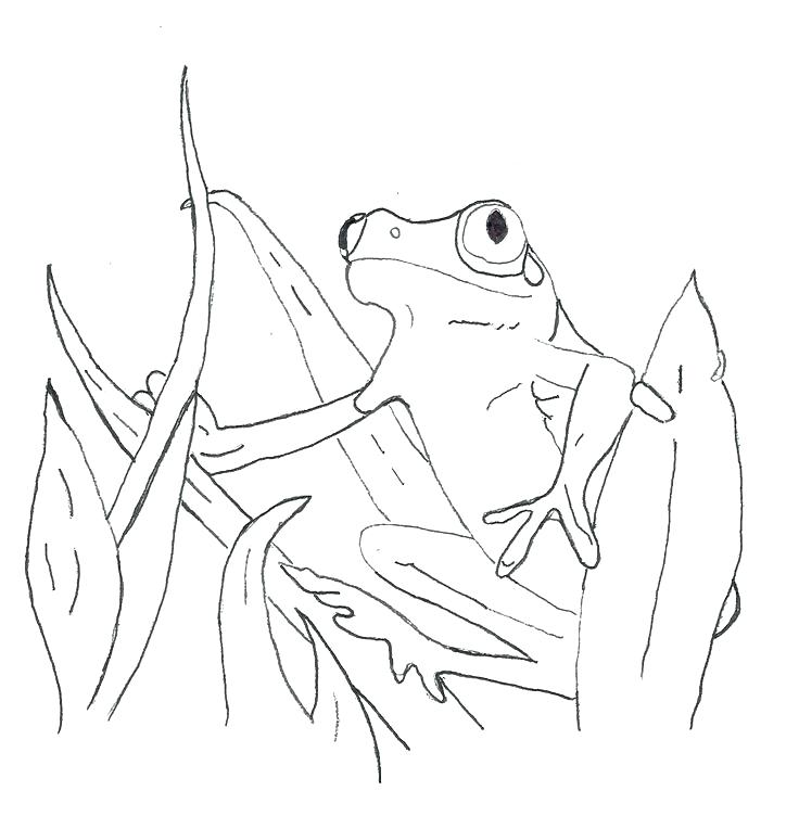 736x764 Coloring Page Frog Printable Frog Coloring Pages Frog Coloring