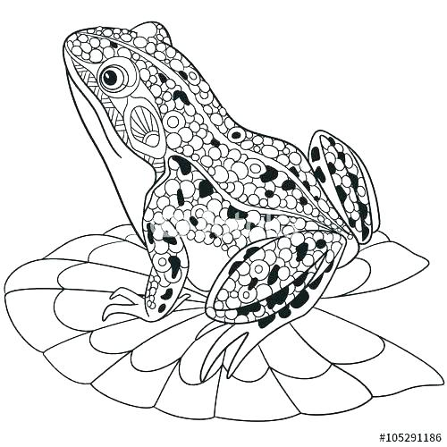500x500 Frogs Coloring Pages Frog Coloring Pages Tree Frog Tropical