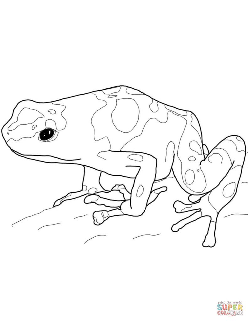 791x1024 Poison Dart Frog Coloring Pages