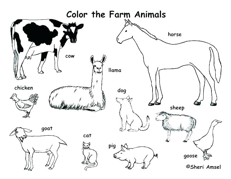 Polar Animals Coloring Pages