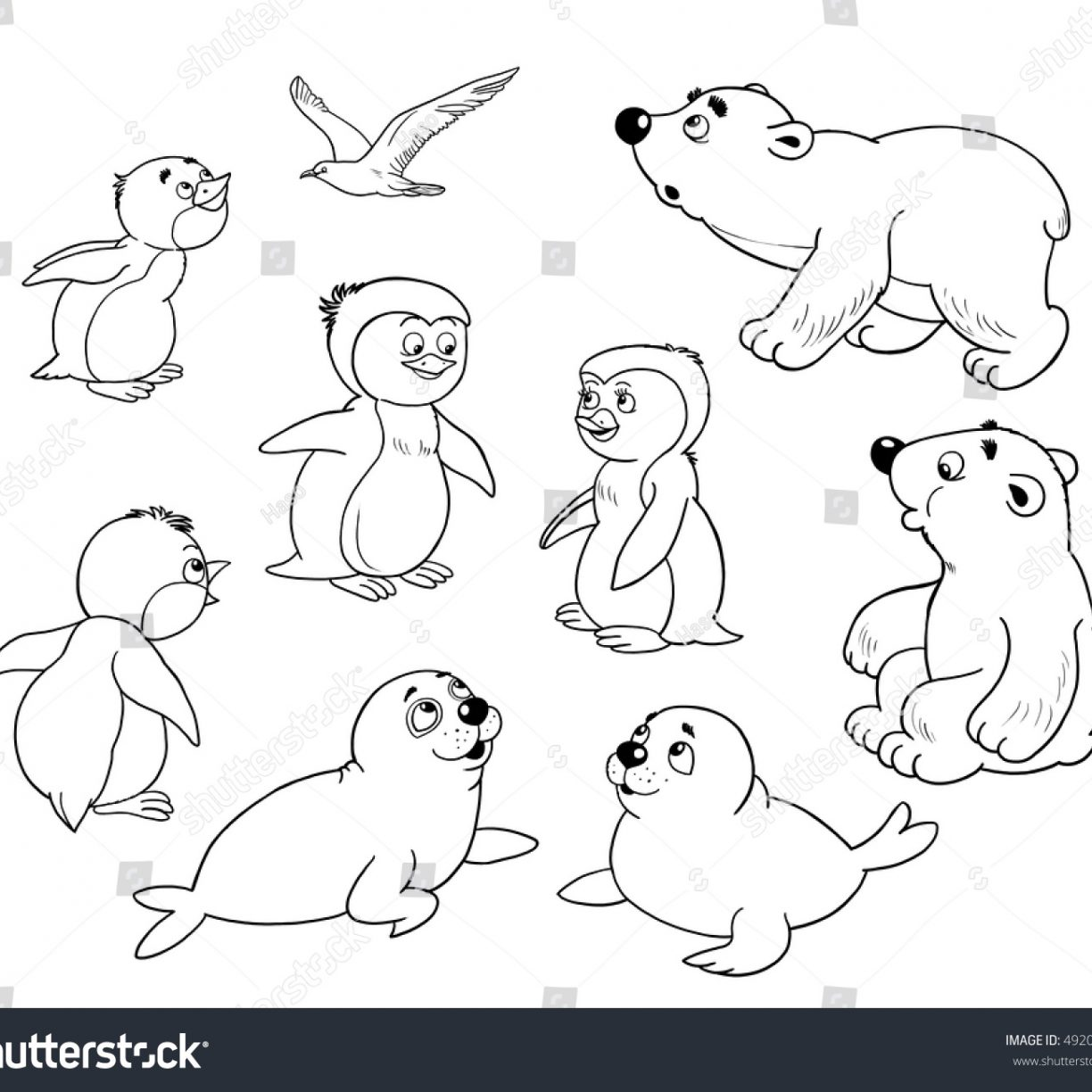 1224x1224 Arctic Animals Colouring Pages Coloring General Free Page