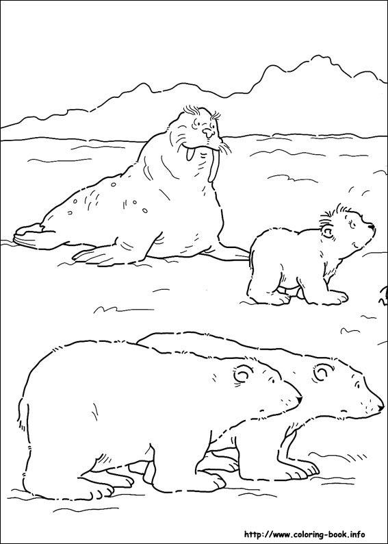 567x794 Little Polar Bear Coloring Picture