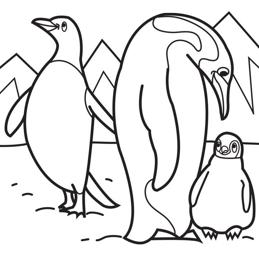 842x842 Penguin Color Page Animal Coloring Pages Kids Coloring Pages