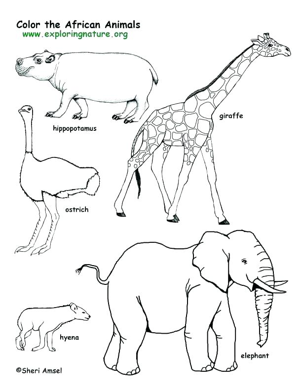 612x792 Polar Animal Coloring Pages Plus Bear Page Outline Cute Coloring