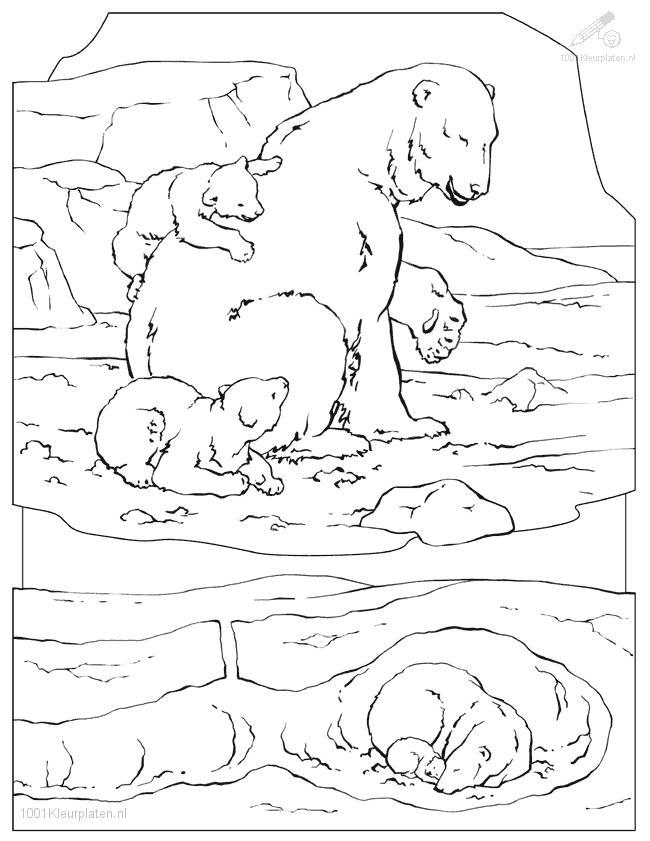 650x841 Polar Coloring Pages
