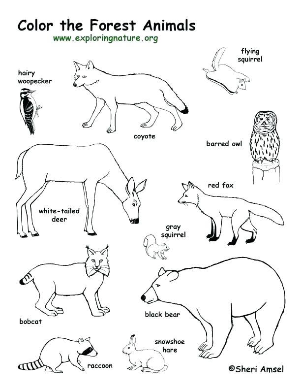612x792 Arctic Animal Coloring Pages Arctic Animals Coloring Pages