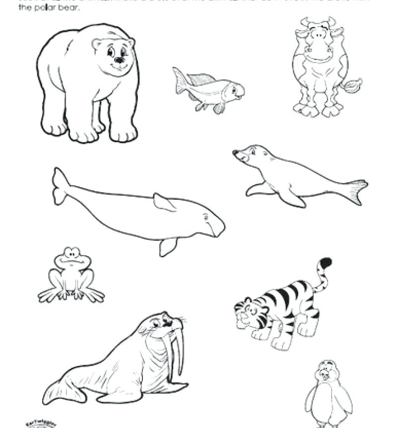 802x864 Arctic Animals Coloring Pages As Well As Arctic Animals Ringed