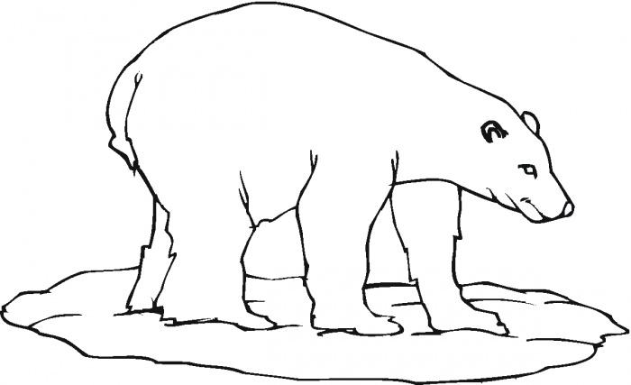 700x427 Polar Bear Coloring Pages Printable Polar Bear Colouring