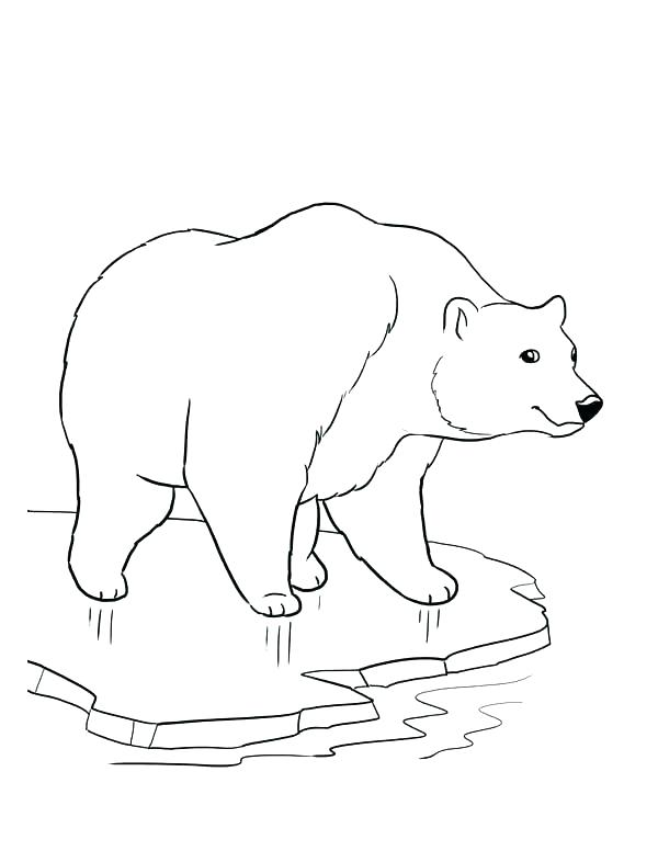 600x776 Polar Bear Coloring Pages Coloring Pages Bears Polar Bear Coloring