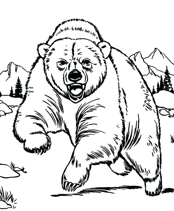600x727 Polar Bear Coloring Pages Free Outline Pictures For Coloring Polar