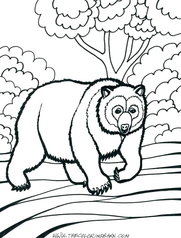 736x964 Polar Bears Coloring Pages Polar Bear Coloring Pages Printable