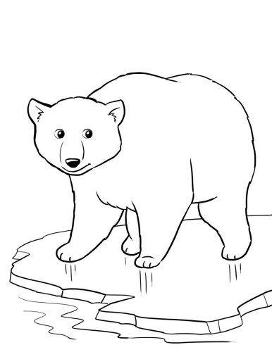 386x500 Top Free Printable Polar Bear Coloring Pages Online Polar