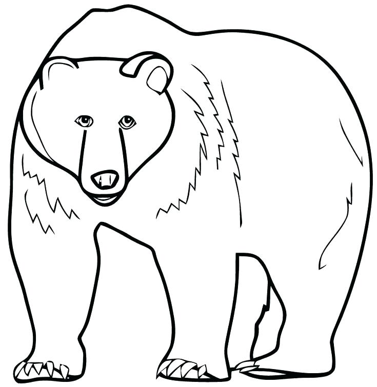 735x755 Coloring Pages Of A Bear