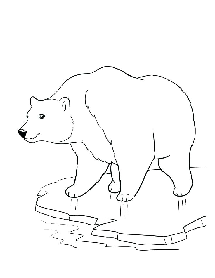 736x952 Bear Coloring Pages Polar Bear Color Page Bear Coloring Pages