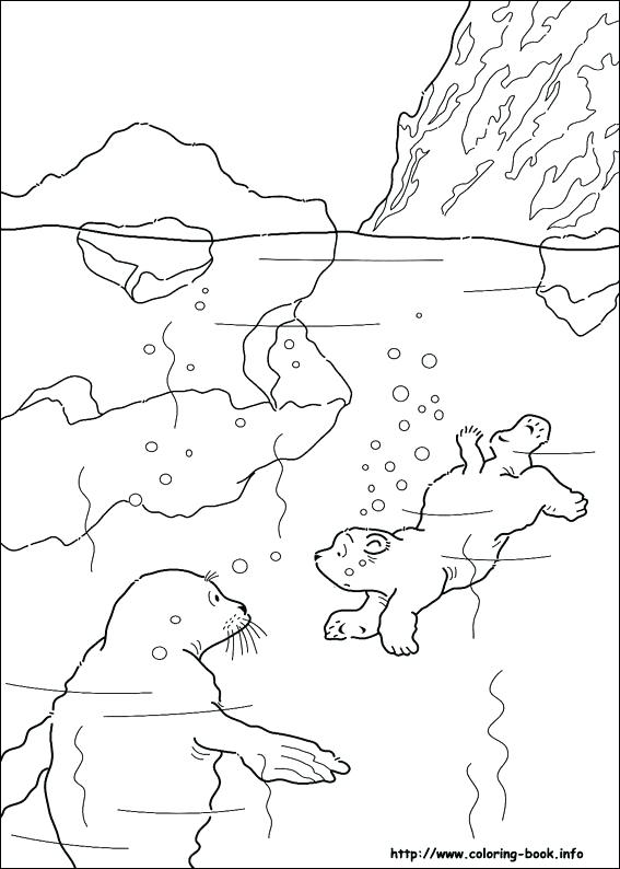 567x794 Polar Bears Coloring Pages