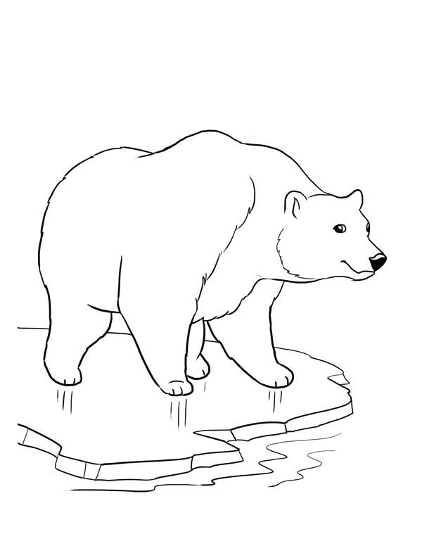 600x776 Drawing Polar Bear Cute Polar Bear Drawing Polar Bear And Penguin