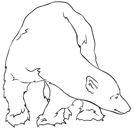 432x417 Polar Bear Coloring Papers Activities New Calendar Template Site