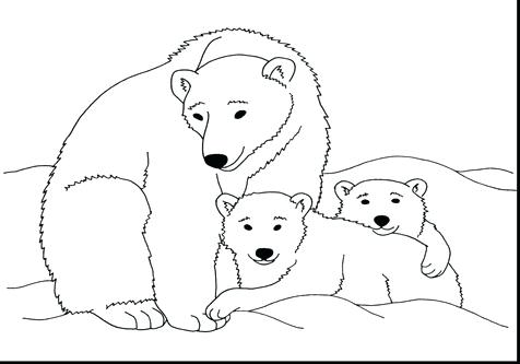 476x333 Polar Bear Coloring Sheet Page Image Images Bear Coloring Pages
