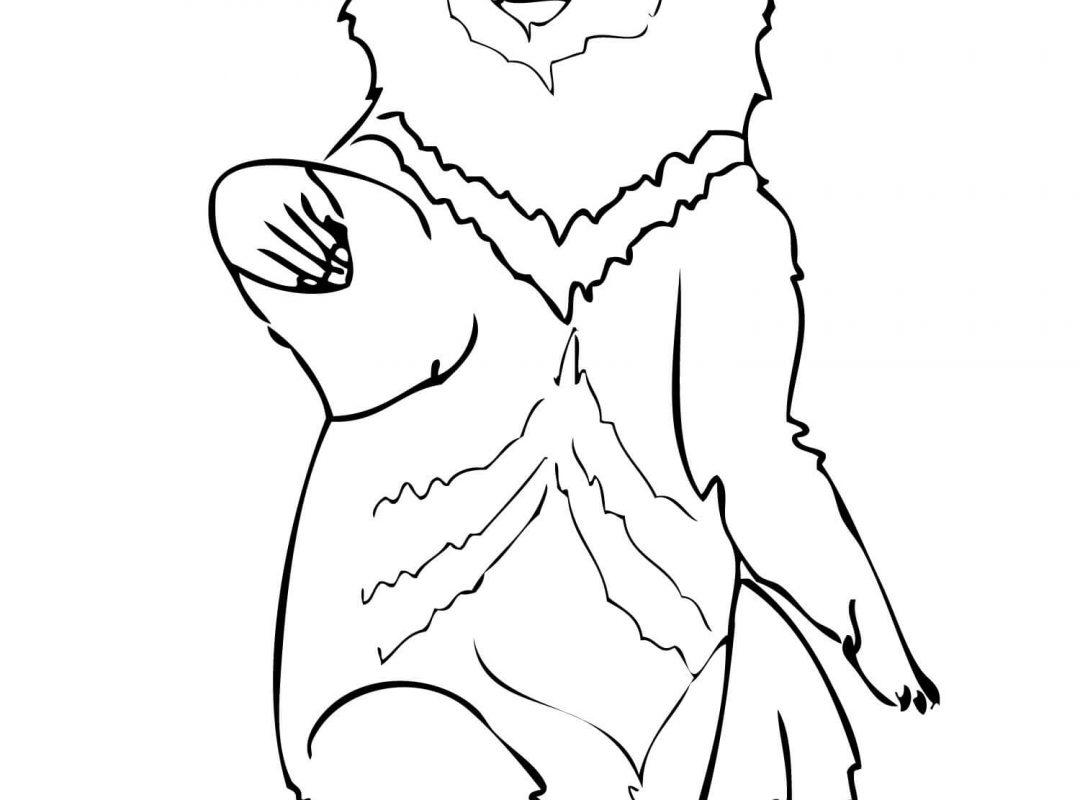 1080x800 Printable Pictures Of Polar Bears Colouring Care Freeng Teddy Bear