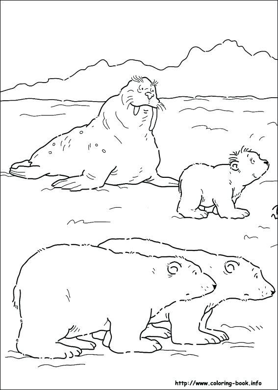 567x794 Polar Bear Coloring Sheets