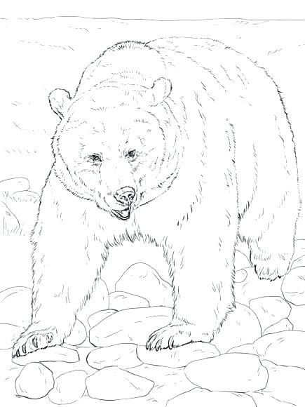 435x580 Bear Cub Coloring Pages Tiger Coloring Pages Coloring Pages