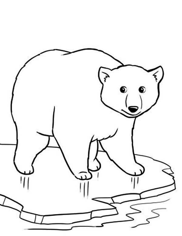 600x777 Polar Bear Coloring Pages Polar Bear On Thin Ice Coloring Page