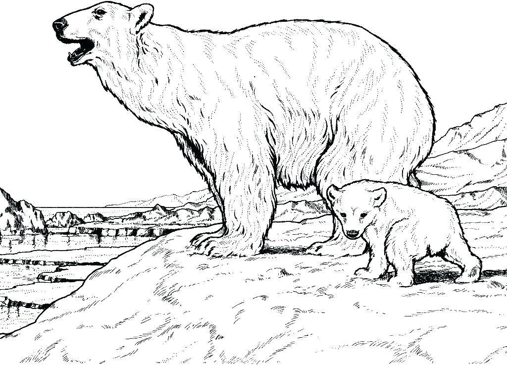 1024x737 Polar Bear Printable Coloring Pages Click The Polar Bear Is Diving