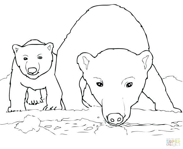 617x500 Polar Bear Printable Coloring Pages Polar Bear Coloring Page Polar