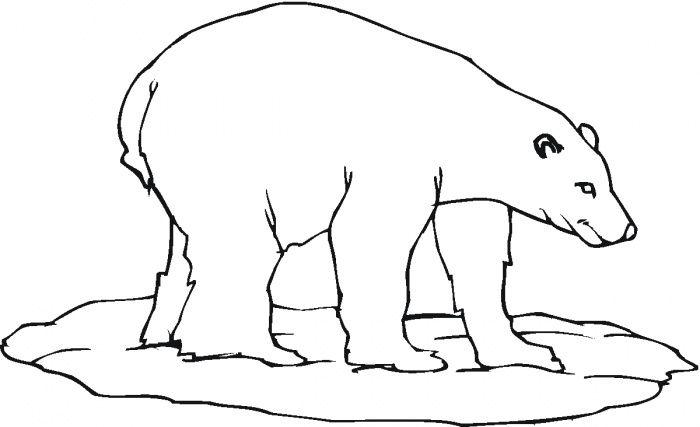 700x427 Polar Bear Colouring In Embrodiey Polar Bear