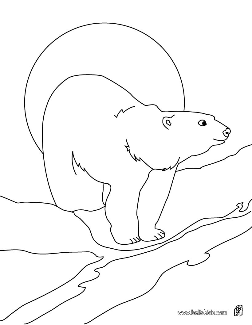 820x1060 Polar Bear Printable Coloring Pages